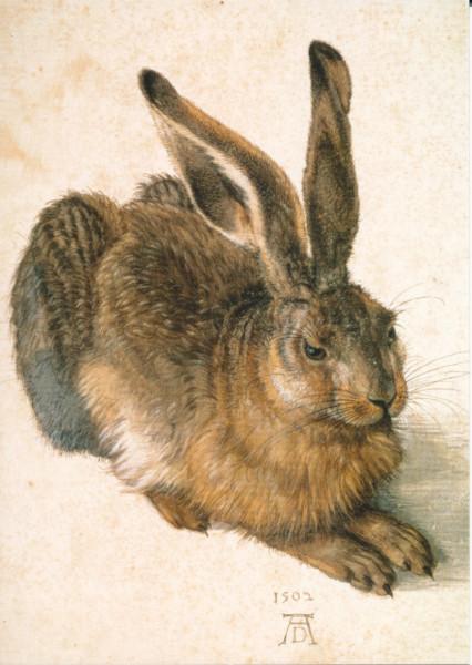 Albrecht Dürer, Junger Feldhase, 1502