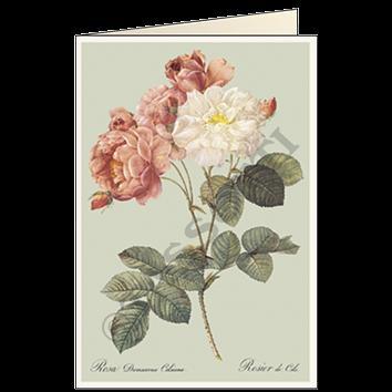 Rosa damscata