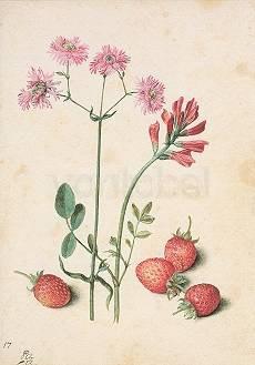 Georg Flegel, Erdbeere