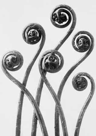 Karl Blossfeldt, Artform in Nature