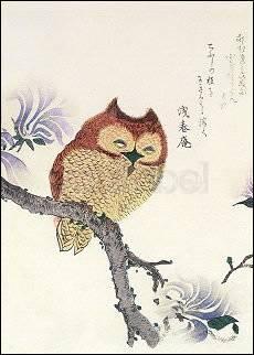 Kubo Shunman (1757-1820), Eule auf einem Magnolienzweig