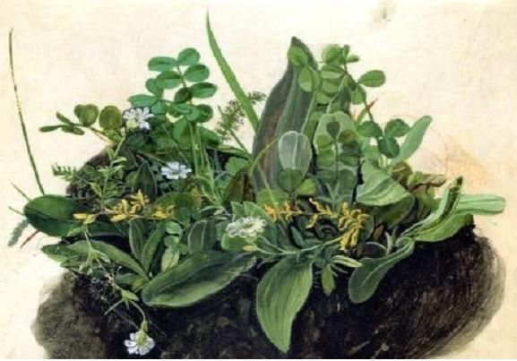 Albrecht Dürer, Das kleine Rasenstück