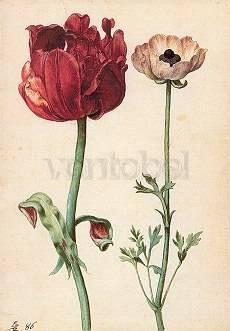 Georg Flegel, Tulpe und Gartenranunkel