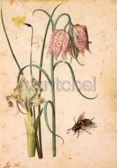 Georg Flegel, Iris, Narcisse, Schachbrettblume