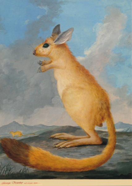 Georg Forster, Springhase (?)